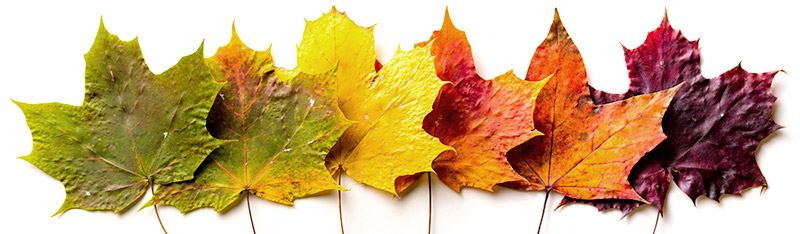 Fall News & Notes